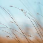 Balans denken-voelen-doen en jouw nieuwe 'normaal